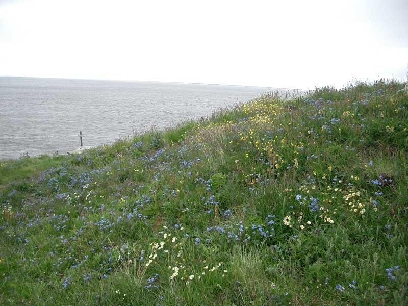 Усть-Кут.RU : Полевые цветы