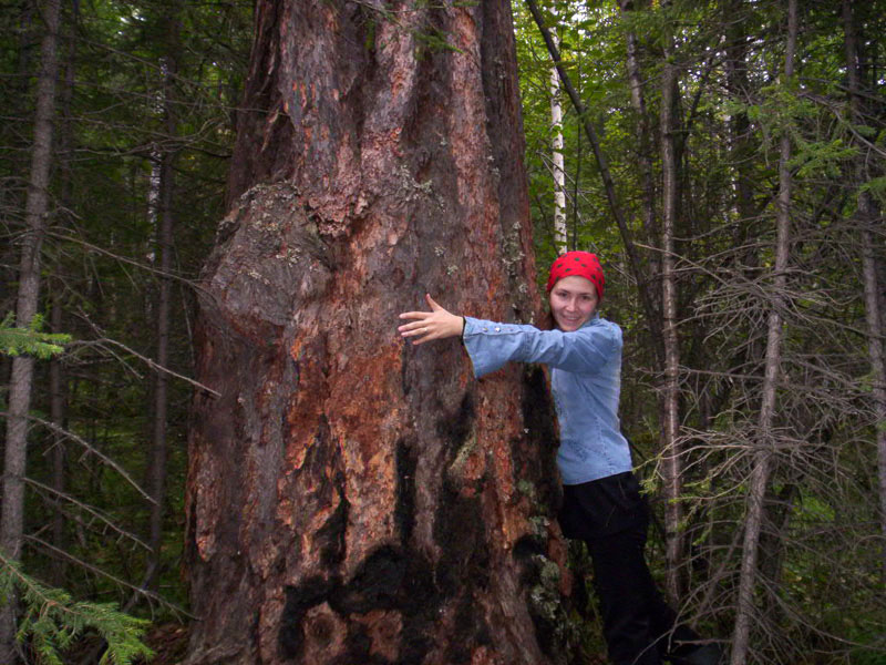 Усть-Кут.RU : Чудо дерево