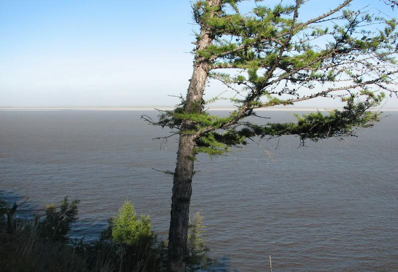Усть-Кут.RU : Одинокое дерево на полярном круге