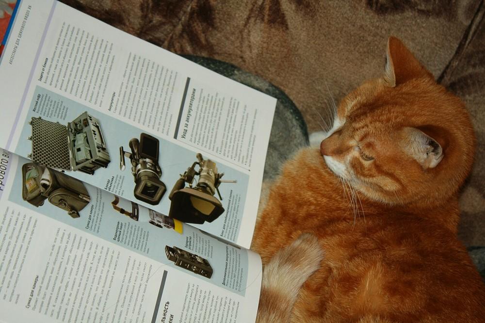 Усть-Кут.RU : Умный кот