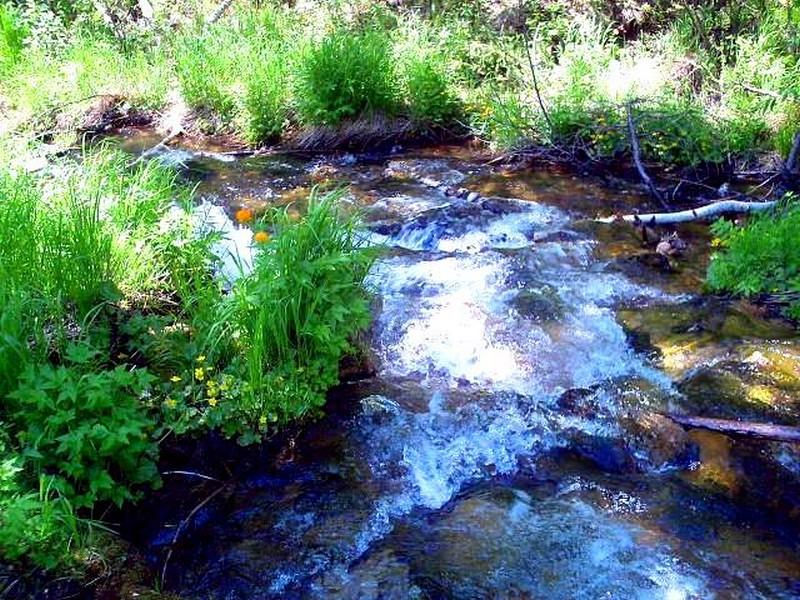 Усть-Кут.RU : Корнейчук Ю. В.  Жарки цветут на ручье Мельничный (2008 )