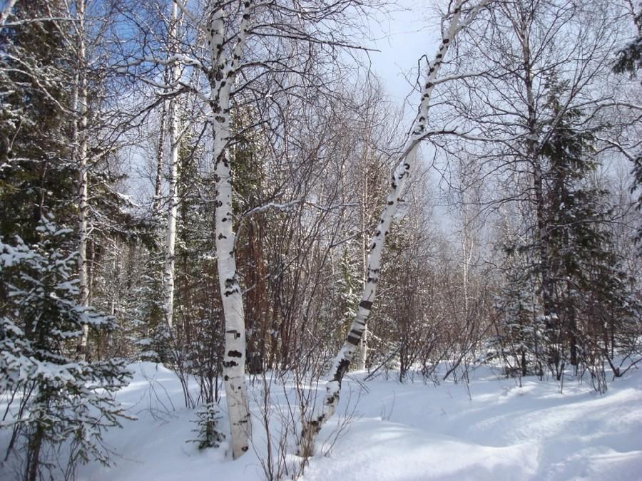 Усть-Кут.RU : Катышевцева Т.С. Зима в Усть-Куте