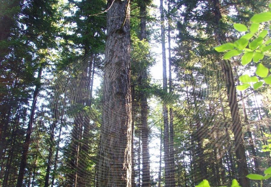 Усть-Кут.RU : Олейник И.В. Лесные узоры