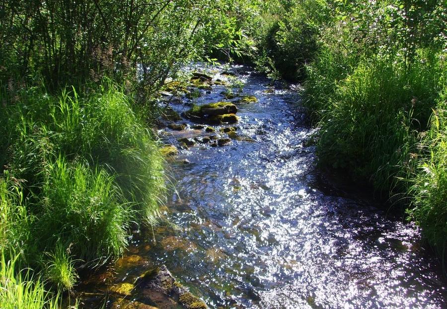 Усть-Кут.RU : Олейник И.В. Живая вода