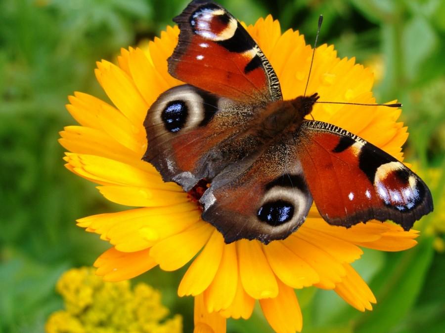 Открытка «Бабочка на цветке» » Сделай сам 47