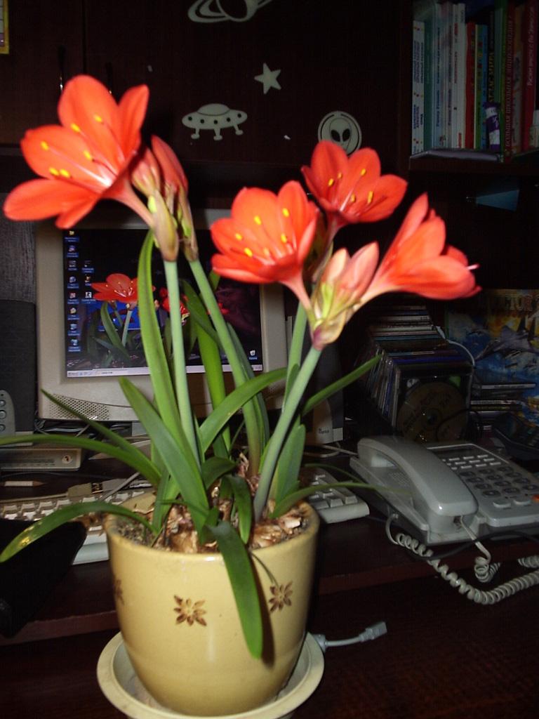 Усть-Кут.RU : Цветы