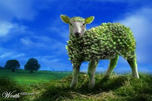 Усть-Кут.RU : Animals&fruits