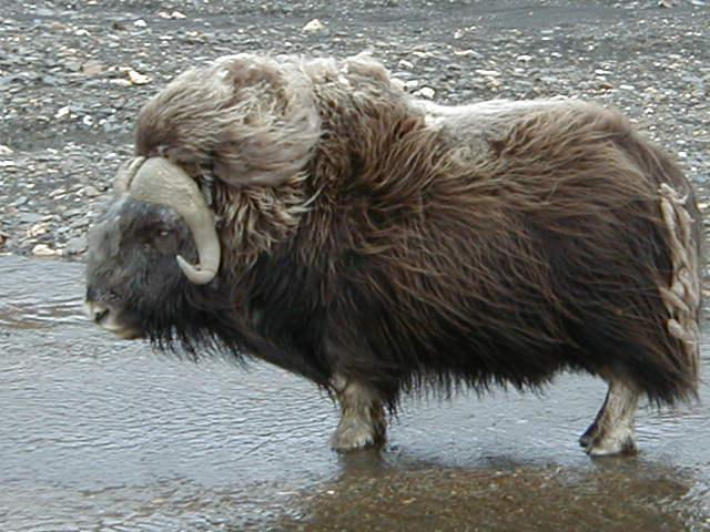 Усть-Кут.RU : Фауна Севера