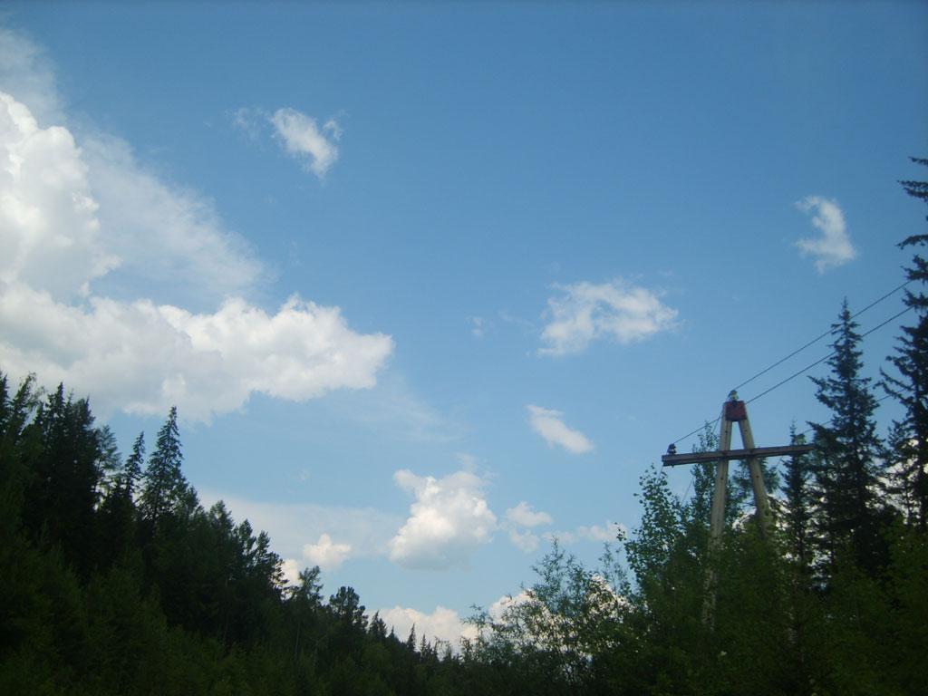 Усть-Кут.RU : Верхушки леса