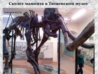 Скелет мамонта в Тюменском музее