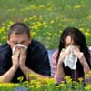 Аллергия. Как уберечься?